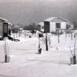 Leden 1979